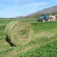 Lucern - large round bales